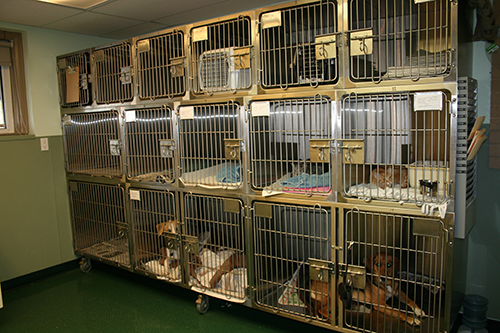 A busy kennel room