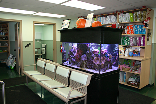 Come see our beautiful fish tank. Can you find Nemo and Dori?